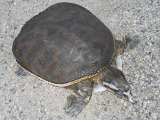 Tips To Enhance Your Soft Covering Leatherback Turtle